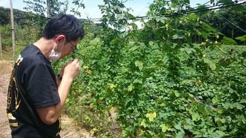 毬花の香りを確認する峯松さん