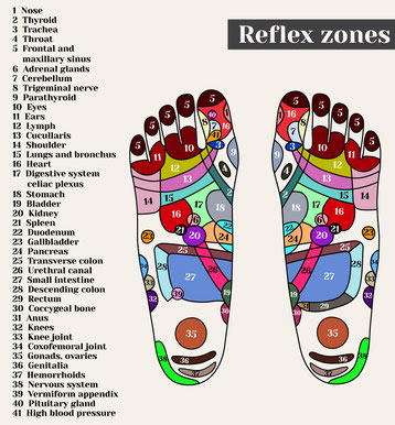 Punkte der Fuß-Reflexzonen-Massage in Yogaschule Schulungszentrum Heilpraxis Voglreiter Bad Reichenhall