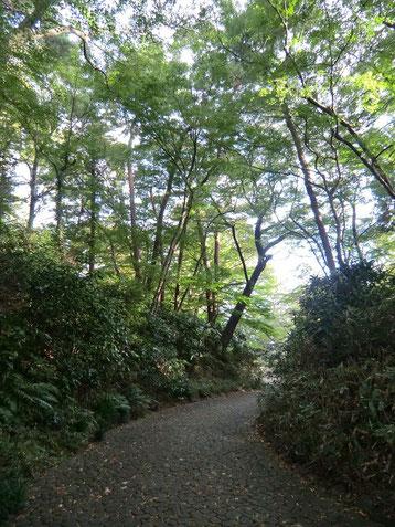 ●園内の坂を下る道。紅葉ももうすぐです