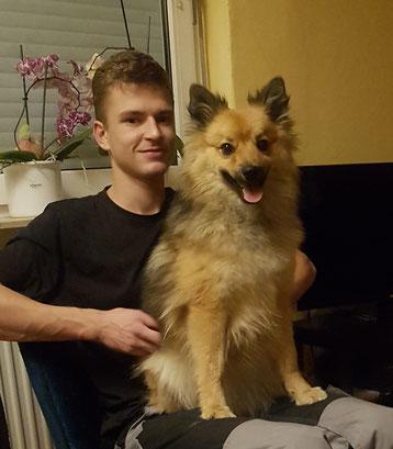 Aurora Spitze sind Familien Hunde