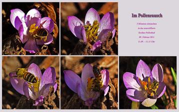 Fünf Minuten im Pollenrausch