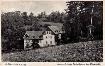 Bild: Wünschendorf Erzgebirge Sommerfrische Palmbaum