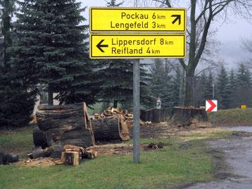 Bild: Wünschendorf Erzgebirge Panzerlinde