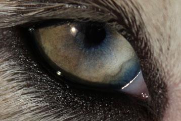 Ambers rechtes Augen