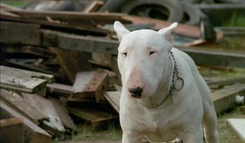 image film fantastique avoriaz baxter chien race bull terrier