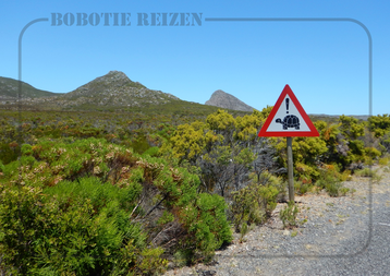Rondreis Zuid-Afrika Safari Bobotie Reizen Pas op schildpadden
