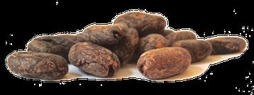 Cacao Mama, Cacao Meditation, Raw Cacao Beans, BigTreeFarms Bali, Ceremony, Berlin