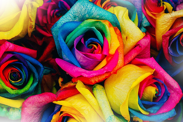 "Foto: ""Colored roses - Bildquelle: Free-Photos von Pixabay"" | perfect sense media consulting - Piet [Peter] Braun, Hamburg"