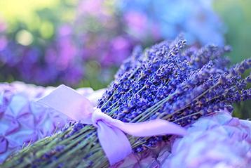 "Foto: ""Lavendel"", Bildquelle: Jill Wellington auf Pixabay | perfect sense media consulting - Piet [Peter] Braun, Hamburg"