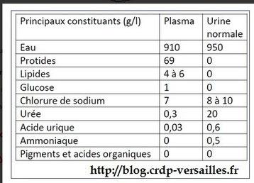 Mesures des principaux constituants présents dans le plasma et dans l'urine normale.