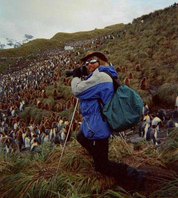 Bild:Biografie,David Brandenberger,South Georgia,photographing,penguins,d-t-b.ch,d-t-b,