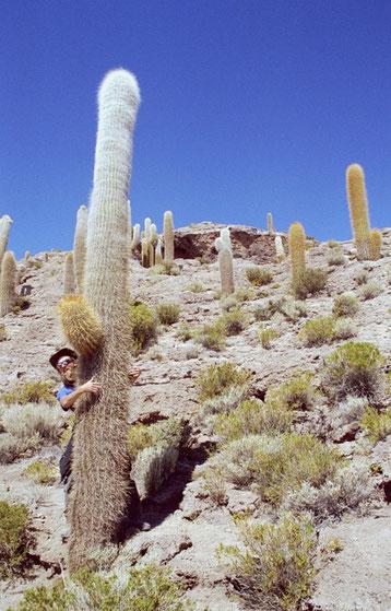 Bild:Spass,Fun,David Brandenberger umarmt Kaktus auf Insel Incahuasi,Salar de Uyuni,Bolivien.