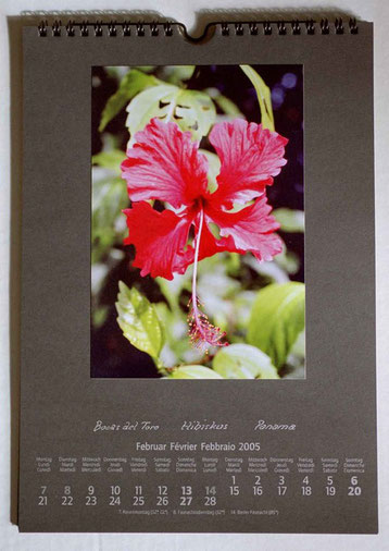 Bild: Blatt,Kalender