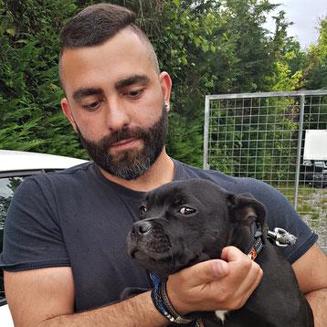 Amira little black jewel - Allevamento Staffordshire Bull Terrier Villamagna Dogs