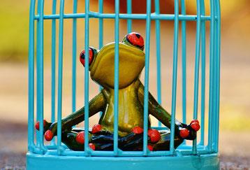 Frosch in Käfig