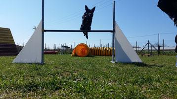 agility dog , agility , agility viareggio , agility Pisa , agility pietrasanta , corso agility dog , agility camaiore , agility massarosa , agility cane