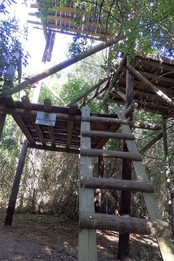 南アフリカ太古の森プラットボスの高見台