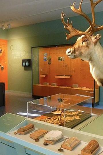 La Cité de la Préhistoire d'Orgnac se met à la portée des néofites pour présenter les découverte archéologiques actuelles