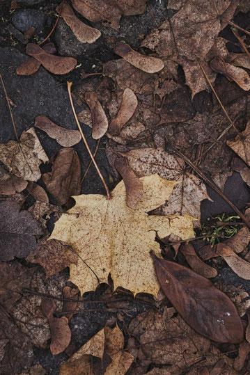 hansestadt laub blatt stralsund nebel herbst november mecklenburg vopommern heimatlicht fotografie geschichte heimat ostsee urlaub ausflug moody