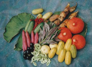 加賀野菜青果物