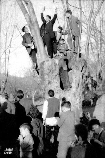 1958-Fisteus-Arbol-Carlos-Diaz-Gallego-asfotosdocarlos.com