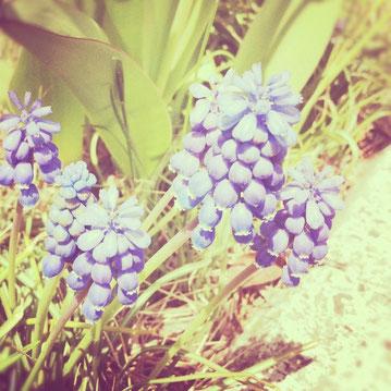 ゴールデンウィークも間もなく。東北はぽかぽか陽気が続きそうですね^^道ばたやお庭のお花さんたちも、春の日差しを浴びて元気いっぱい!青い虹は、ゴールデンウィーク中も、通常と同じ営業日で営業しております。どうぞよろしくお願いいたします!