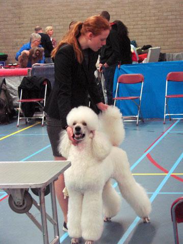 Hondenshow in Zuphen 2017 / 1 U