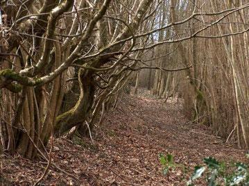Chemin rural du Frety (commune de Thiéry Pré) fort heureusement entretenu par deux habitants, M et Mme Pouyet.