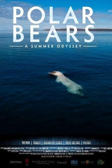 affiche polar bear mario cyr