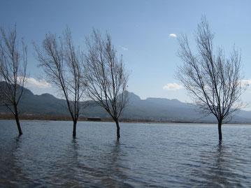 Bäume ragen aus überfluteter Seenlandschaft in blau-schwarz