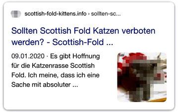 """Juli 2020, Screenshot Google-Suche: """"Scottish Fold Katze"""", Der Satz: """"Es gibt Hoffnung für die Katzenrasse Scottish Fold"""" ist eine irreführende Behauptung und eine Einladung, noch mehr Katzen mit Qualzucht-Merkmalen zu züchten."""