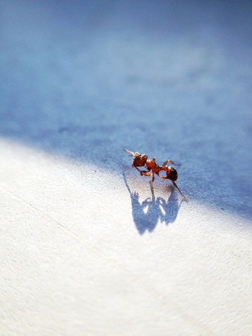 Ant Now The End Is Near