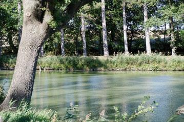 Le chemin de service, qui longe la rigole de bout en bout, permet de faire sans fatigue de belles petites promenades à l'ombre des arbres - crédit photo : Couleur Média