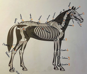 Analyse: nuria-guedel.ch - Bildquelle Pferd: www.vet-pferdepraxis-klingeberg.de