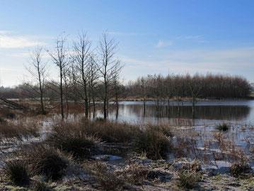 Winter in der Siersdorfer Senke (Foto: Wolfgang Voigt)
