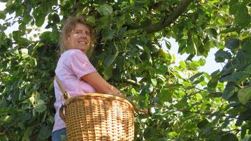 Mit Freude bei der Apfelernte