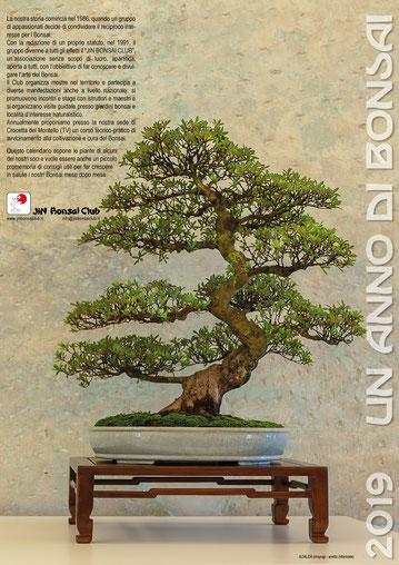 copertina calendario jin Bonsai Club
