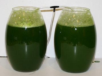 fotobioreattore per alghe