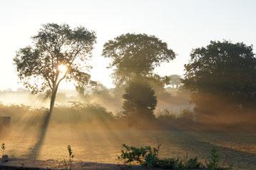 Brume matinale début septembre dans les arbres entourant le jardin.