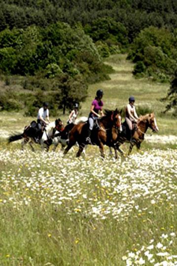 Au galop sur le plateau Ardéchois lors d'une randonnée équestre
