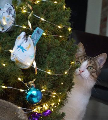 Katze Kasi unter dem Weihnachtsbaum