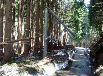 残雪がひどく、杉の木はバッタバッタ。電柱までもがポキリ。