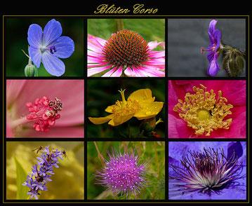 Blüten-Corso