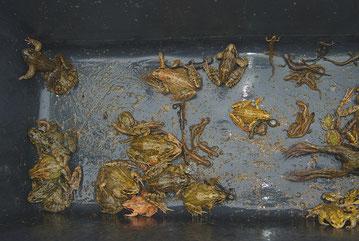 Amphibien Amphibienschutz Amphibienschutztunnel Merkener Busch NABU Düren