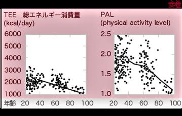 PAL(physical activity level)とは総エネルギー消費量を基礎代謝量で除した値