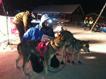 Sandrine et ses chiens après 400km de course