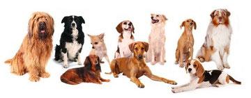 10 unterschiedlich  Hunderassen sitzen zusammen