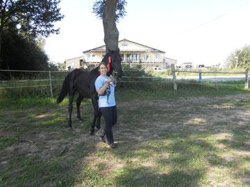 Wer platzt zuerst vor Stolz: Sieger der Hengste 1-2 jährig und Champion der Junghengste beurteilt durch Judy Kibler, Morgan-Horse-Association USA