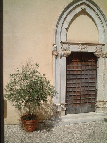 ザ・イタリアなオリーブの鉢植え。雰囲気抜群です!