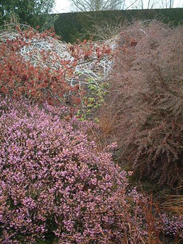 冬にはエリカの花も貴重な存在